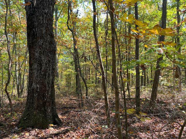 149 Fire Tower Rd, Sequatchie, TN 37374 (MLS #1326318) :: The Jooma Team