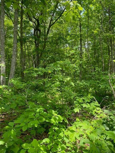 Lot 9 Blumont Drive Lot 9, Altamont, TN 37301 (MLS #1336657) :: Keller Williams Greater Downtown Realty | Barry and Diane Evans - The Evans Group