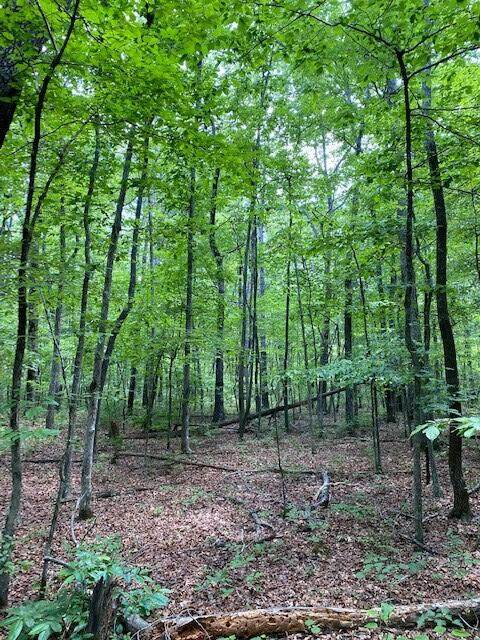 Lot 44 Bluff Woods #44, Altamont, TN 37301 (MLS #1338221) :: Keller Williams Greater Downtown Realty | Barry and Diane Evans - The Evans Group
