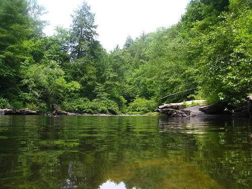 995 Lake Shore Dr, Coalmont, TN 37313 (MLS #1340672) :: Smith Property Partners
