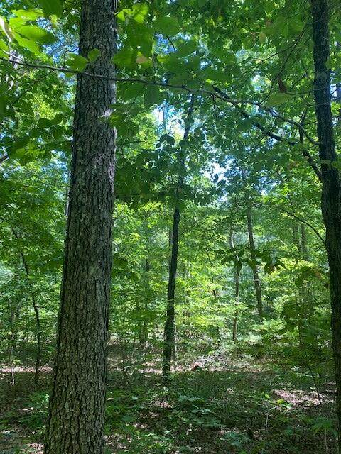 Lot 13 Mountain Lake Drive #13, Pikeville, TN 37367 (MLS #1342867) :: Keller Williams Greater Downtown Realty | Barry and Diane Evans - The Evans Group