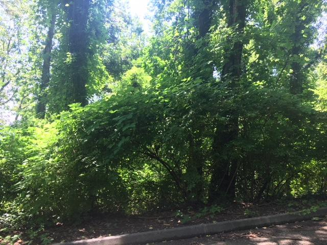 0 Sunset Dr Lot #18, Signal Mountain, TN 37377 (MLS #1267648) :: The Mark Hite Team