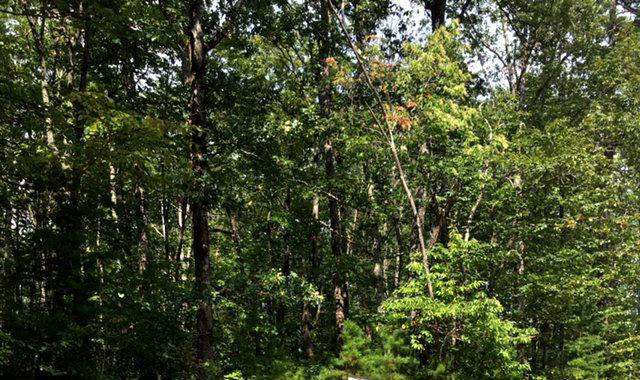 0 Clear Brooks Dr #46, Signal Mountain, TN 37377 (MLS #1287317) :: Chattanooga Property Shop