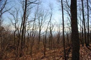 00 County Rd 797 Rd, Valley Head, AL 35989 (MLS #1330723) :: Chattanooga Property Shop