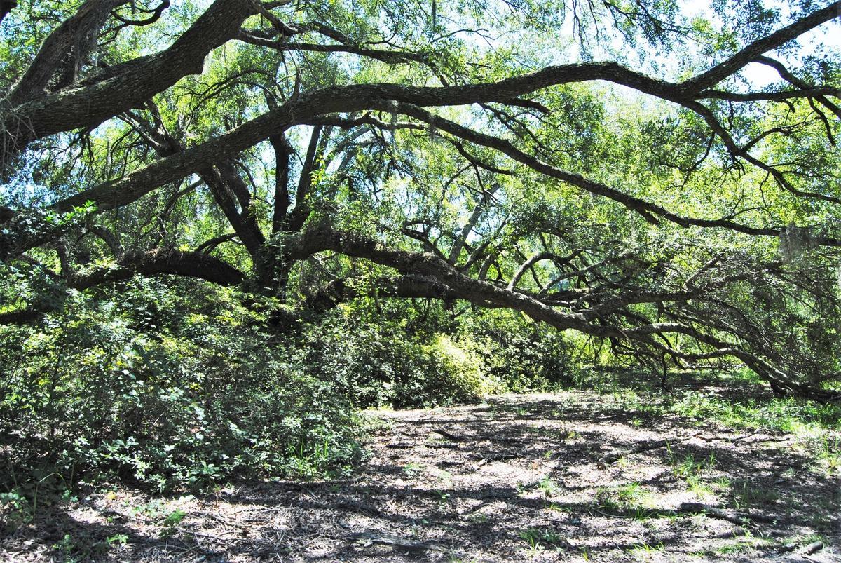 1356 Live Oak Dr - Photo 1