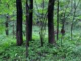 0 Coon Hollow Road - Photo 4