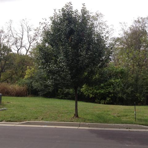 8-Lot Cityscape West Drive, Cincinnati, OH 45205 (#1564689) :: Bill Gabbard Group