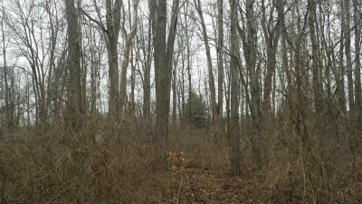 0-0.28ac Tulip Drive, Deerfield Twp., OH 45140 (#1525456) :: Chase & Pamela of Coldwell Banker West Shell
