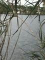 10907 Xanadu Path - Photo 2