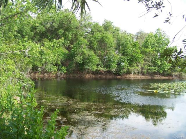 6100 N Blue Teal Point, Hernando, FL 34442 (MLS #757989) :: Plantation Realty Inc.
