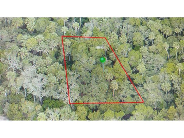 14665 W Black Creek Drive, Crystal River, FL 34429 (MLS #764187) :: Plantation Realty Inc.