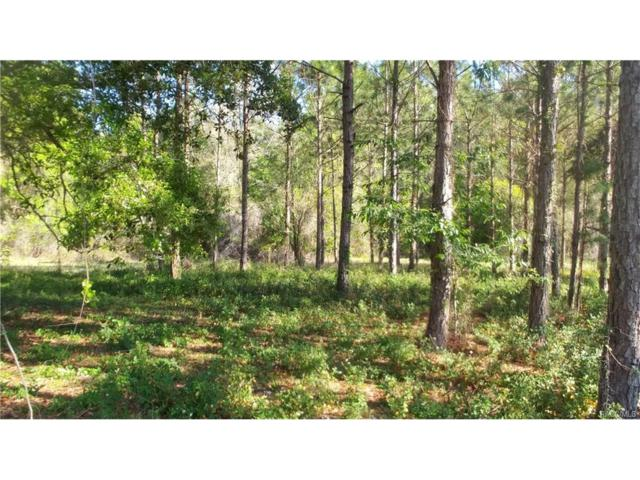 3199 N Chandler Drive, Hernando, FL 34442 (MLS #768410) :: Plantation Realty Inc.