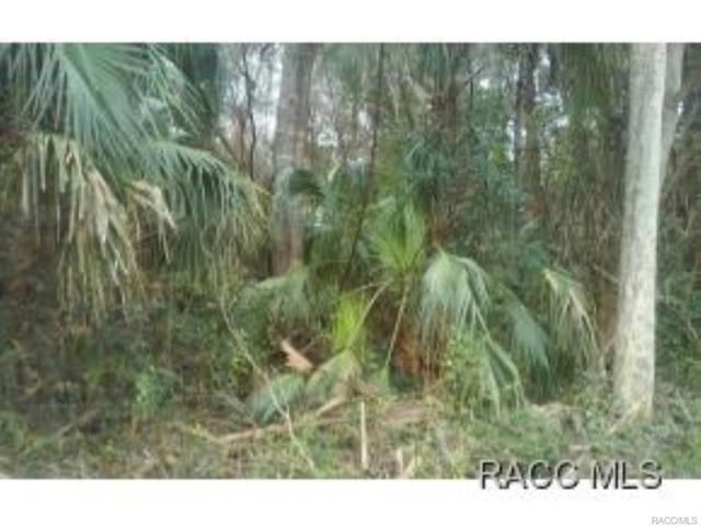 0 W 40 Highway W, Yankeetown, FL 34498 (MLS #771735) :: Plantation Realty Inc.