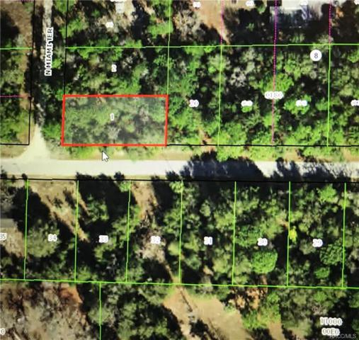 10045 N Miami Terrace, Dunnellon, FL 34433 (MLS #774462) :: Plantation Realty Inc.