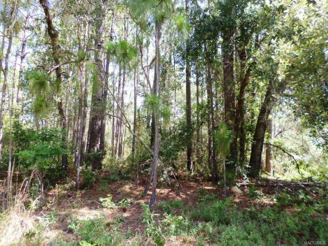 3631 W Citrus Springs Boulevard, Citrus Springs, FL 34433 (MLS #774493) :: Plantation Realty Inc.