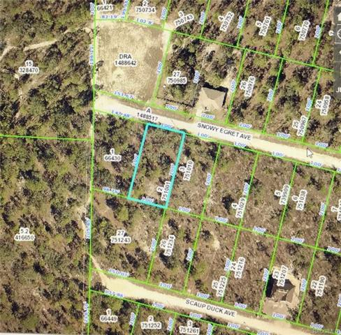 0 Snowy Egret Avenue, Weeki Wachee, FL 34614 (MLS #774511) :: Plantation Realty Inc.