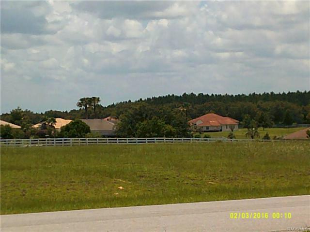 15 N Spend A Buck Drive, Inverness, FL 34453 (MLS #774616) :: Plantation Realty Inc.