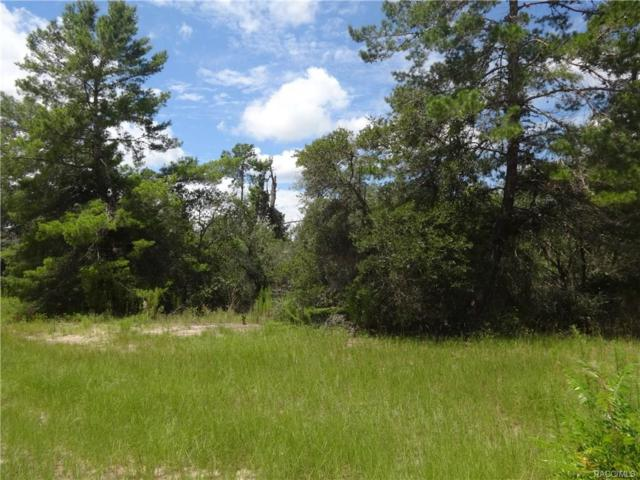 0 SW 175th Loop, Ocala, FL 34473 (MLS #775011) :: Plantation Realty Inc.
