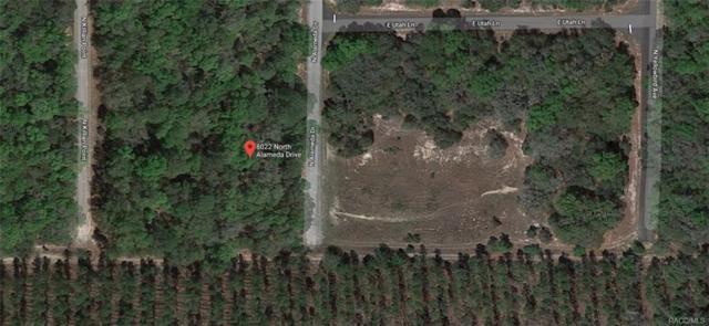 8022 N Alameda Drive, Citrus Springs, FL 34434 (MLS #775980) :: Plantation Realty Inc.