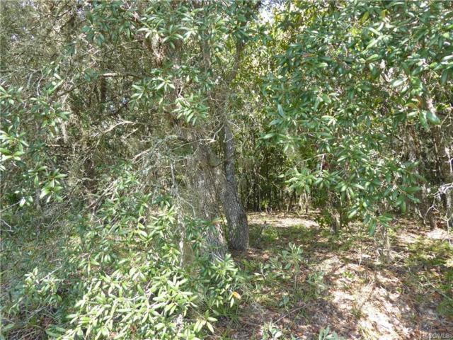 1575 E Monopoly Loop, Inverness, FL 34453 (MLS #776896) :: Plantation Realty Inc.
