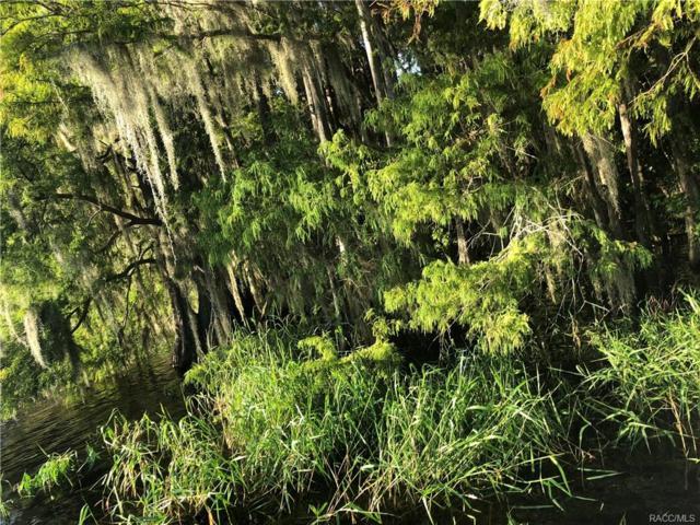9116 E Gobbler Drive, Floral City, FL 34436 (MLS #777109) :: Plantation Realty Inc.