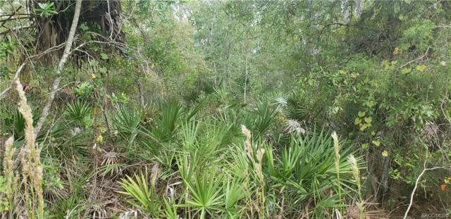 693 S Candlenut Avenue, Homosassa, FL 34446 (MLS #777970) :: Plantation Realty Inc.