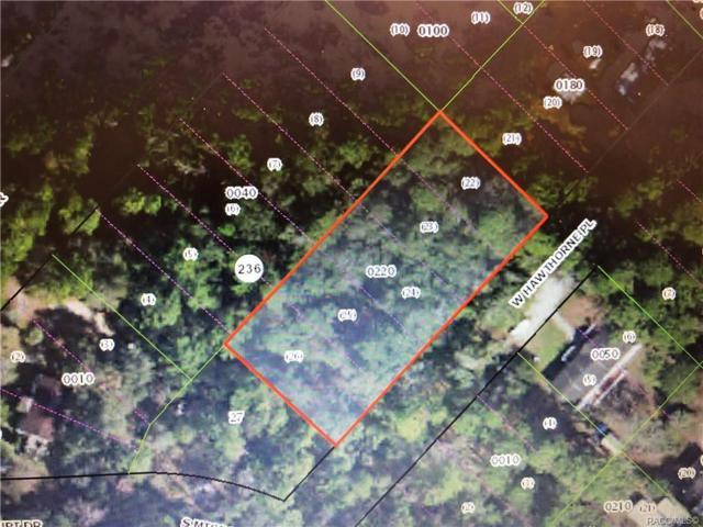 8081 W Hawthorne Place, Homosassa, FL 34448 (MLS #778588) :: Plantation Realty Inc.