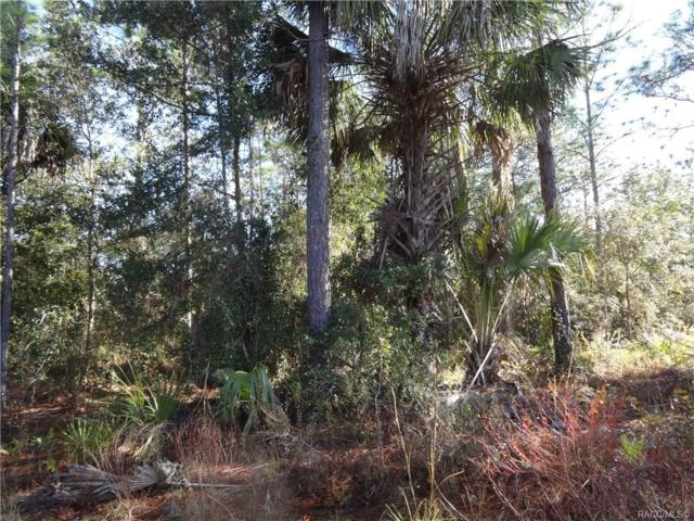 1377 S Candlenut Avenue, Homosassa, FL 34448 (MLS #779080) :: Plantation Realty Inc.