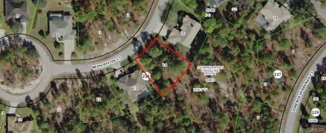 5 Nephthytis Court, Homosassa, FL 34446 (MLS #782168) :: Pristine Properties