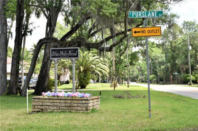 4350 S Conwell Point, Homosassa, FL 34448 (MLS #782177) :: Plantation Realty Inc.