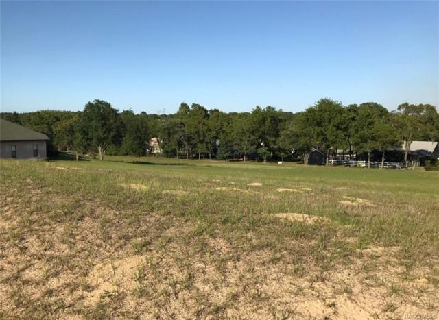 1085 N Spend A Buck Drive, Hernando, FL 34442 (MLS #782352) :: Plantation Realty Inc.