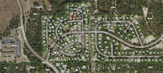 5845 W Sugar Court, Homosassa, FL 34448 (MLS #782470) :: Plantation Realty Inc.