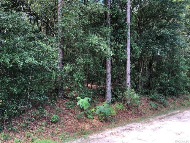 3062 E Robert Street, Inverness, FL 34453 (MLS #782850) :: Pristine Properties