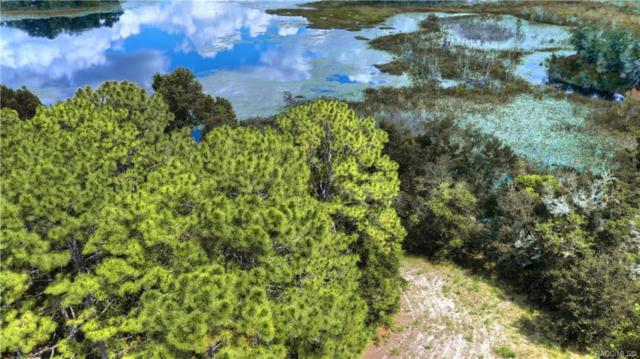 2173 W Springlake Drive, Dunnellon, FL 34434 (MLS #783216) :: Plantation Realty Inc.