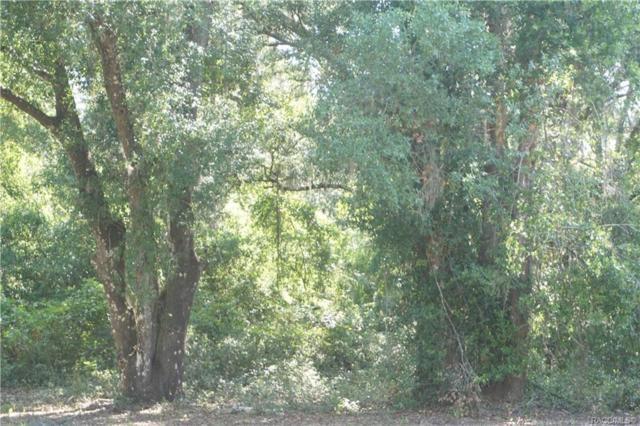 14175 NE 14th Street Road, Silver Springs, FL 34488 (MLS #783246) :: Plantation Realty Inc.