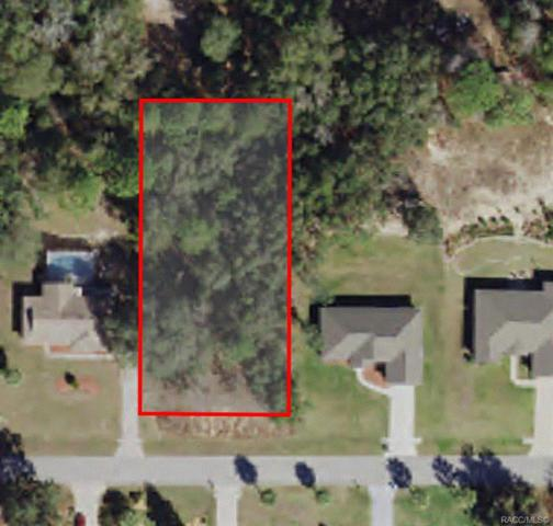 1621 E St. James Loop, Inverness, FL 34442 (MLS #783550) :: Plantation Realty Inc.