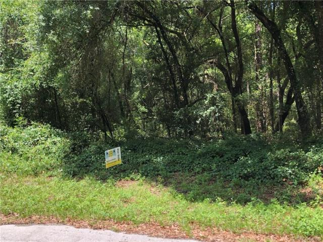 446 E Elgrove Drive, Citrus Springs, FL 34434 (MLS #783735) :: Plantation Realty Inc.