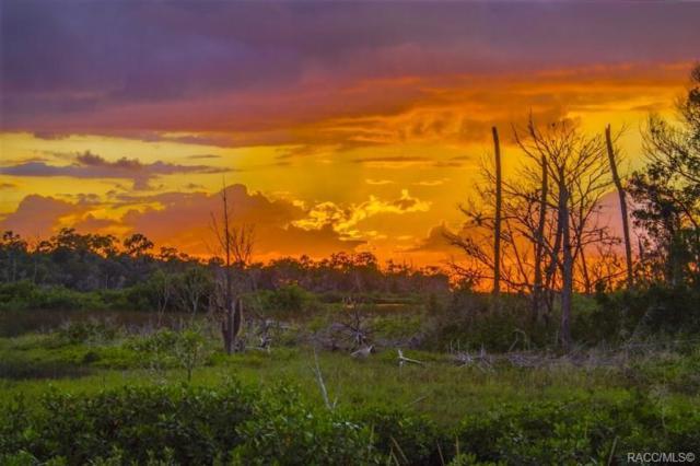 14412 W Ozello Trail, Crystal River, FL 34429 (MLS #784337) :: Plantation Realty Inc.