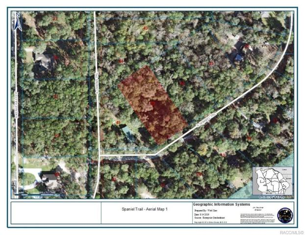 4170 S Spaniel Trail, Inverness, FL 34450 (MLS #785333) :: Pristine Properties
