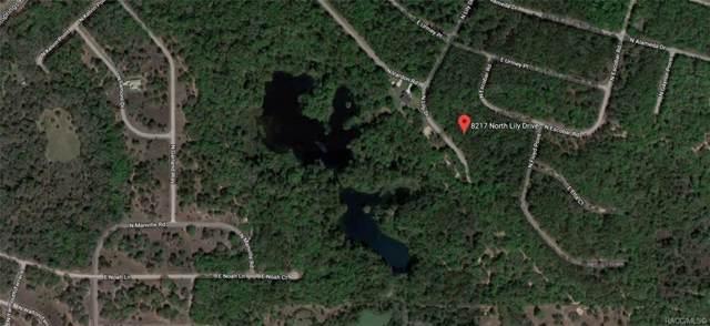 8217 N Lily Drive, Citrus Springs, FL 34434 (MLS #787675) :: Plantation Realty Inc.
