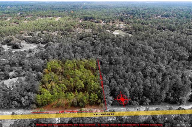 3952 N Buckhorn Drive, Beverly Hills, FL 34465 (MLS #788194) :: Plantation Realty Inc.