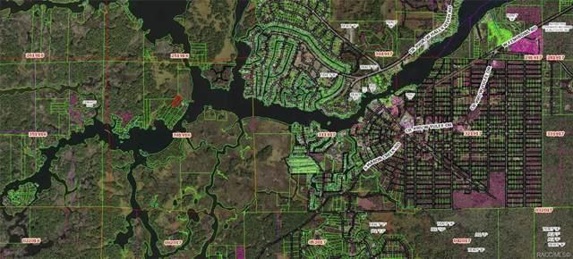 12491 The Homosassa River River, Homosassa, FL 34448 (MLS #789043) :: Pristine Properties