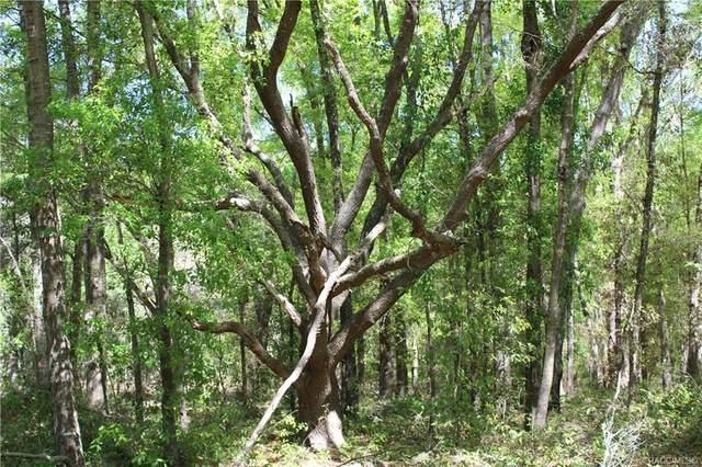 2585 W Waycormon Court, Dunnellon, FL 34433 (MLS #791028) :: Plantation Realty Inc.