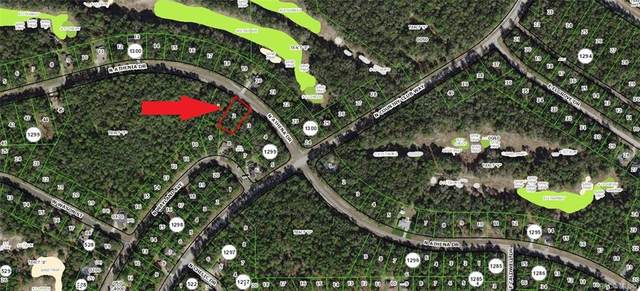 10126 N Athenia Drive, Citrus Springs, FL 34434 (MLS #791168) :: Pristine Properties