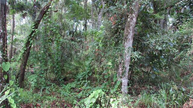 9290 W Spring Cove Road, Homosassa, FL 34448 (MLS #793197) :: Plantation Realty Inc.