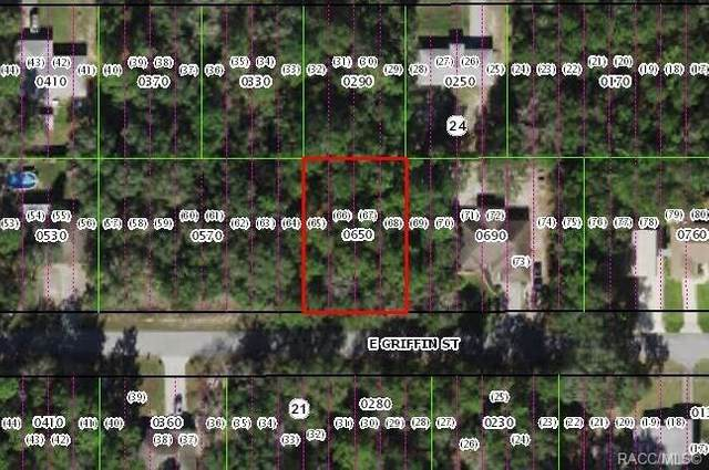 3251 E Griffin Street, Inverness, FL 34453 (MLS #797898) :: Plantation Realty Inc.