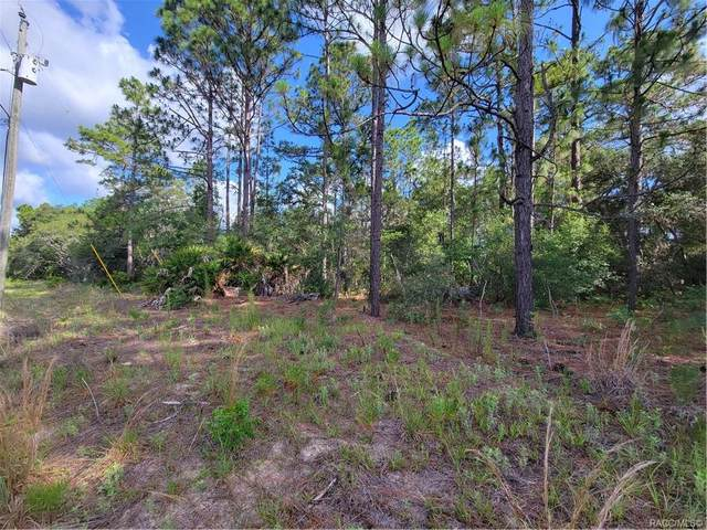 2579 W Riley Drive, Citrus Springs, FL 34434 (MLS #802187) :: Plantation Realty Inc.