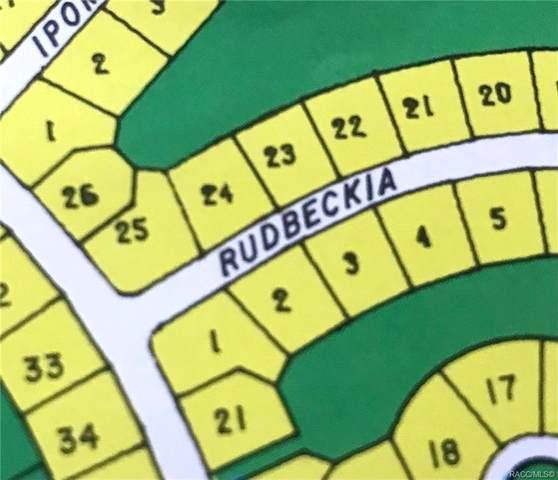1 Rudbeckia Court, Homosassa, FL 34446 (MLS #805942) :: Plantation Realty Inc.