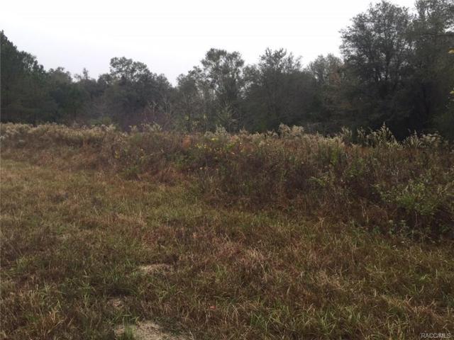 831 E Noah Lane, Citrus Springs, FL 34434 (MLS #766579) :: Plantation Realty Inc.