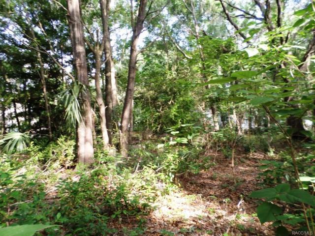 6472 W Riverbend Road, Dunnellon, FL 34433 (MLS #771935) :: Plantation Realty Inc.